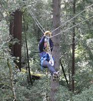 Zipline Tour Through the Redwoods